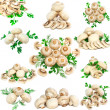 Royalty-Free Stock Photo: Collage(collection) of mushroom-champignon with green parsley and dill. Iso
