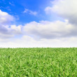 Meadow with green grass and blue sky. — Stock Photo