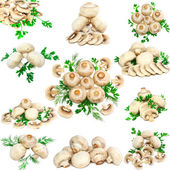 Collage(collection) of mushroom-champignon with green parsley and dill. Iso — Stock Photo