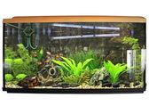 Beautiful aquarium. Isolated — Stock Photo