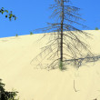Sand dunes - Stock Photo