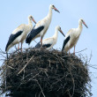 Stork family in the nest — Stock Photo