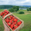 Strawberries in basket — Stock Photo #1889483