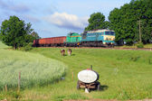 Rural scene with a freight train — Stock Photo