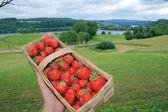 Erdbeeren in einen korb — Stockfoto