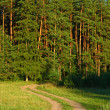 Постер, плакат: Summer sunny scene in the forest