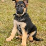Ritratto di un cane seduto sull'erba — Foto Stock