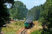 Pociąg towarowy wejście do lasu — Zdjęcie stockowe