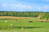 Polish summer rural landscape — Stock Photo