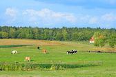 Polish summer rural landscape — Stock Photo