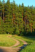 Summer sunny scene in the forest — Stock Photo