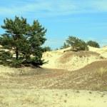 Sand dunes — Stock Photo #1972449