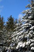 Scena invernale — Foto Stock