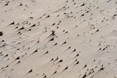 Texture of sand on the beach — Stock Photo