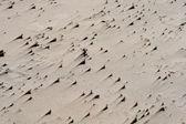 Consistenza di sabbia sulla spiaggia — Foto Stock