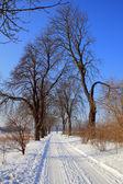Zimowa scena — Zdjęcie stockowe