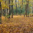 Autumn scene at the forest — Stock Photo