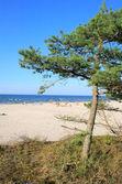Plaj manzara — Stok fotoğraf