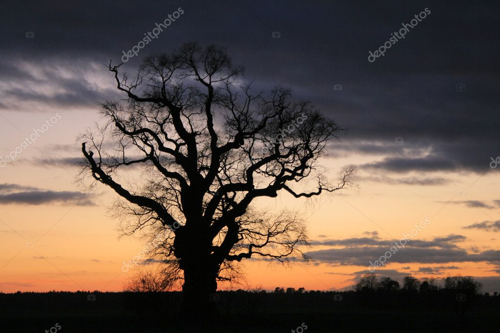 Spooky scene. A lonely tree against the dramatic sky during the evening — Stock Photo #2029862