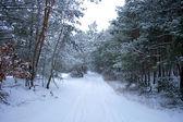 Kış orman — Stok fotoğraf