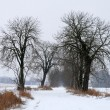 Winter landscape — Foto Stock #2176444