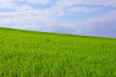 Blue sky, green grass — Stock Photo