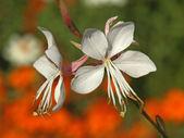 Esotici fiori bianchi — Foto Stock