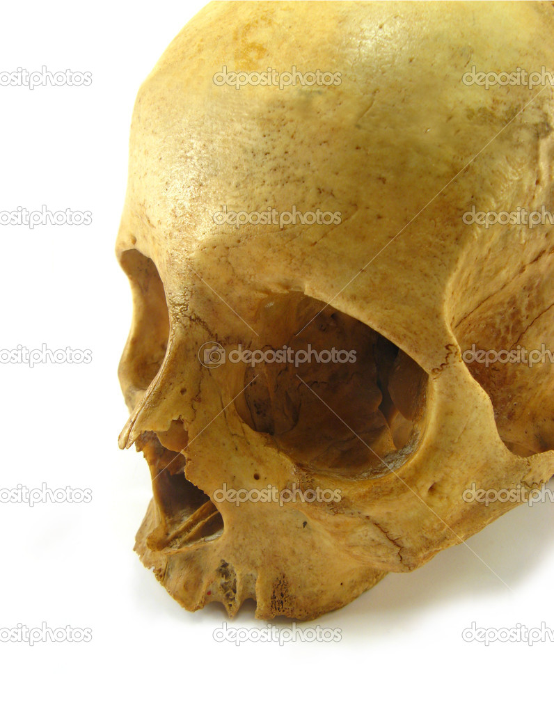 Image of a skull on a white background — Stock Photo #1920555