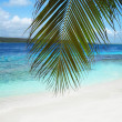 Beautiful beach in Caribbean sea — Foto Stock