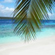 Beautiful beach in Caribbean sea — Foto de Stock