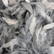 Stock Photo: Grey feather boa