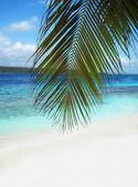 Beautiful beach in Caribbean sea — Stock Photo