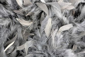 Grey feather boa — Stock Photo