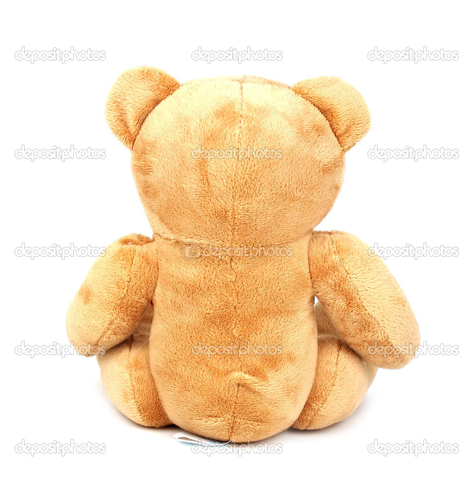 Teddy isolated on white background. Back view   Stock Photo #1906703