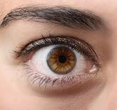 Brown open eye — Stock Photo