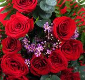 Růže červené pozadí — Stock fotografie