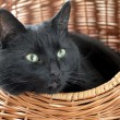 Royalty-Free Stock Photo: Cat in basket