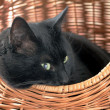 Stock Photo: Cat in basket