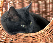 Cat in basket — Stock Photo