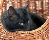 Cat in basket — Stock Photo