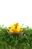 Chickens in basket on cress — Stock Photo