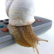 Snail on remote control for tv - Stock Photo