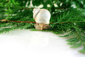 Snail on greens — Stock Photo