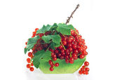 Red currants in bowl — Stock Photo