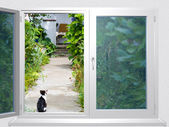 View from the window lane at cat — Stock Photo