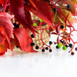 Autumn bunch of leaves — Stock Photo