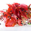 Autumn bunch of leaves on white — Stock Photo