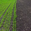 Stockfoto: Field crops from grass