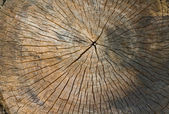 Sawn tree trunk — Stock Photo
