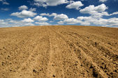 Ploughed field. — Photo